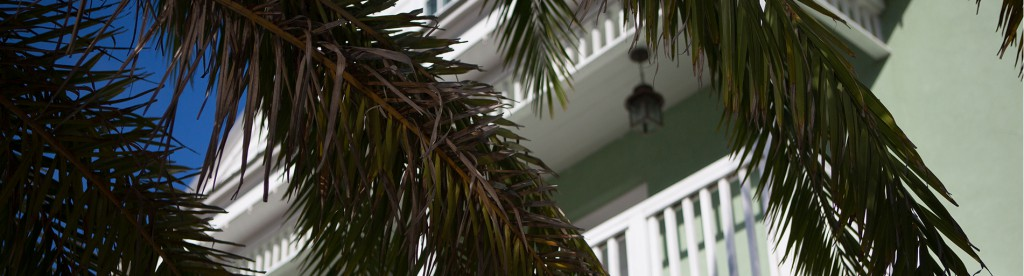 palm-slider3